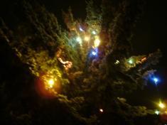 Rozsvícení vánočního stromu 2014.